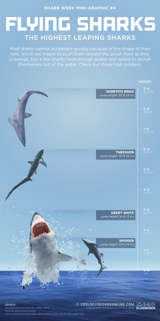 Flying Sharks – The Highest Leaping Sharks